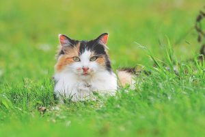 tabby cat laid in long grass
