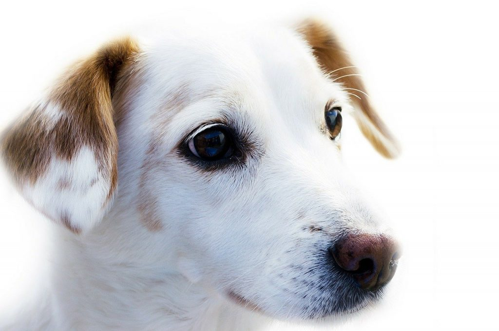 human foods safe for dogs to eat