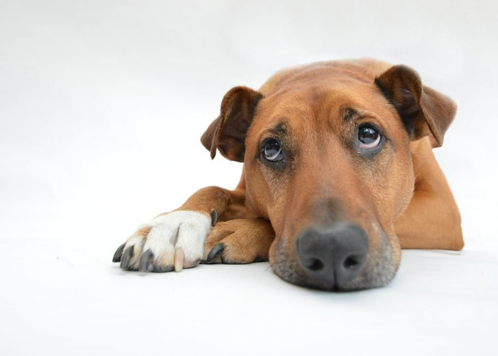 dog waiting for human food safe for dogs to eat