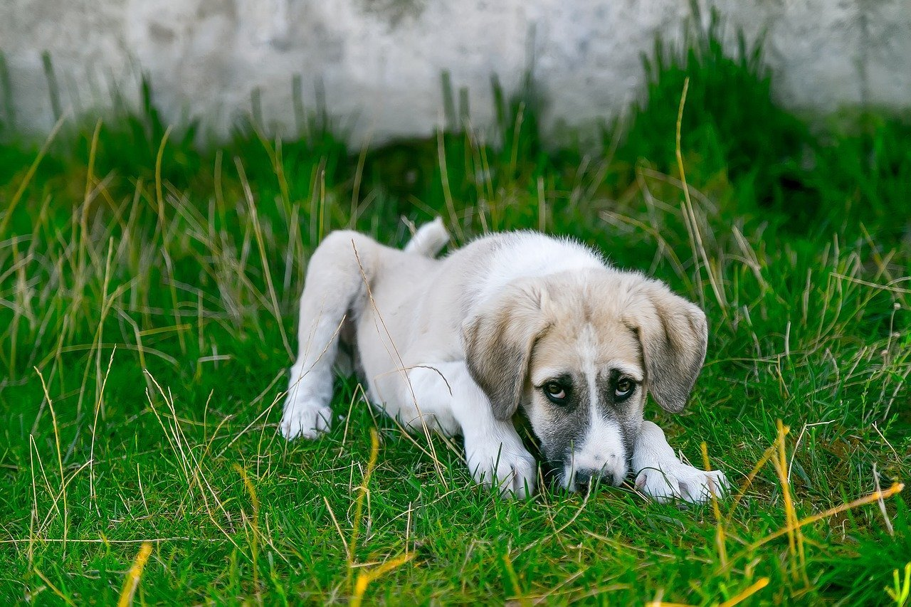 Sick Dog 30 Human Foods Dangerous To Dogs