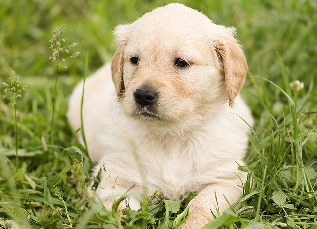 puppy 30 human foods dangerous for dogs to eat