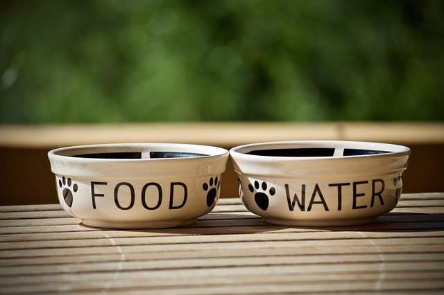 zero waste dog essentials bowls
