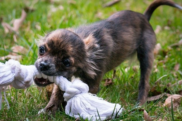 natural dog toys zero waste pets