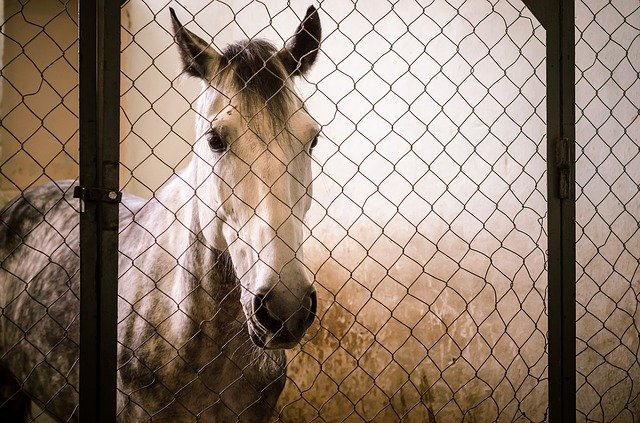 horse in cage