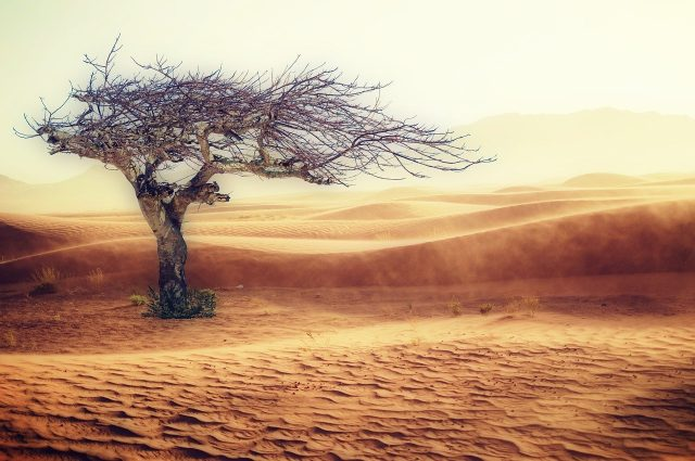 what is vegan leather tree in a desert