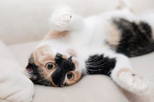 cats-essential-oils-toxic-to-cats