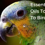 essential oils toxic to birds (1)