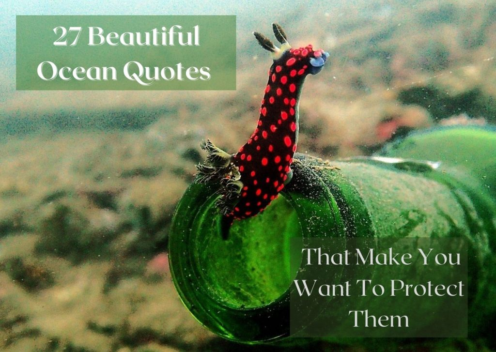 27 Beautiful Ocean quotes