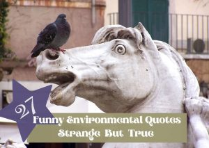 27-environmental- quotes-that-make-you-think-and-smile