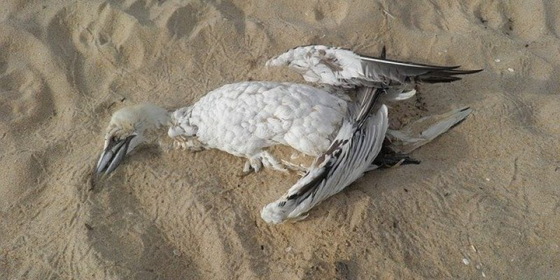 dead bird from eating plastic waste sustainability dad